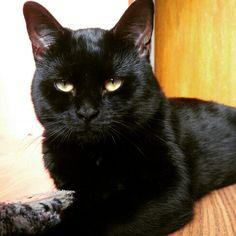 Shiny World Domination, Cats, Animals, Gatos, Animales, Animaux, Animal, Animais, Kitty