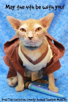 This Cat Weirdly Looks Like Yoda From 'Star Wars'