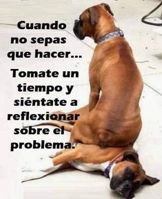 Funny sayings about dogs humor 47 Ideas for 2019 Funny Mom Quotes, Sarcastic Quotes, Dog Quotes, Cute Quotes, Funny Memes, Funny Spanish Jokes, Spanish Humor, Pitbull, Qoutes About Life