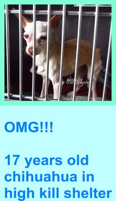 A4795672 I am a 17 yr old female white/tan Chihuahua mix. My owner left me here on Jan 28. available 2/1/15. Baldwin Park shelter 4275 Elton Street, Baldwin Park, California 91706 Phone 626 430 2378 https://www.facebook.com/photo.php?fbid=916739111671260&set=pb.100000055391837.-2207520000.1422743478.&type=3&theater