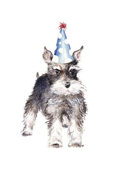 This is a greeting card featuring my original watercolor painting of a schnauzer, with his grumpy schnauzer puppy eyebrows, adorned with a Schnauzers, Happy Birthday Animals, Happy Birthday With Dogs, Schnauzer Puppy, Miniature Schnauzer, Black Schnauzer, Happy 1st Birthdays, Dog Items, Birthday Greetings