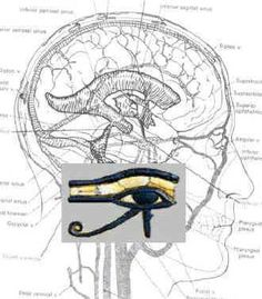Eye of Horus Brain : The Internal Stargate (Great read about the pineal gland and how the use of Kundalini energy will activate it) Ancient Aliens, Ancient Egypt, Pineal Gland, Pituitary Gland, Spirit Science, Eye Of Horus, Stargate, Illuminati, Sacred Geometry