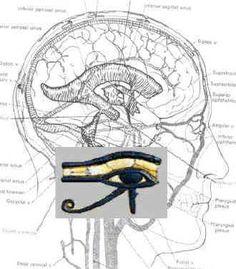 Pineal Gland ~ Seat of the Third Eye | 2012 The Awakening