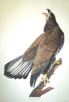 John James Audubon, Plate 126: : Lot 27