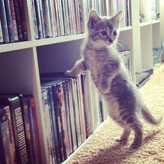 #Cats  #Cat  #Kittens  #Kitten  #Kitty  #Pets  #Pet  #Meow  #Moe  #CuteCats  #CuteCat #CuteKittens #CuteKitten #MeowMoe      Shall I choose the movie? ...   https://www.meowmoe.com/14846/