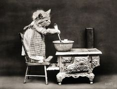 """1914. """"Cat wearing apron, stirring pot on miniature stove."""" As seen on the classic cooking show Kitten Kitchen. Photo by Harry W. Frees."""