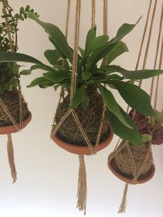 Charming Hanging Plants ideas to Brighten Your Patio Air Plants, Indoor Plants, Garden Art, Garden Plants, String Garden, Staghorn Fern, Macrame Plant Hangers, Ikebana, Hanging Plants