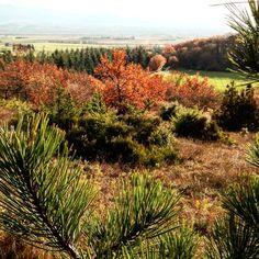 Ballade en Drôme #dromejetaime #igerdrome #simplelife #instamood #autumn #pines #frenchcountry #onmyway