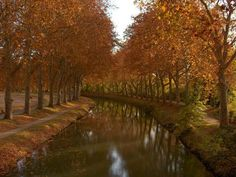 Canal du Midi in late spring - Bing Resimler Le Canal Du Midi, I Want To Travel, Europe, Autumn Trees, Autumn Inspiration, Paris France, Places Ive Been, Paths, Waterfall