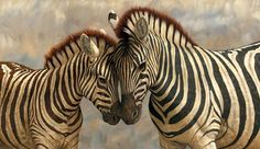 Zebras are several species of African equids (horse family) united by their distinctive black and white striped coats. Their stripes come in different patter. Zebra Painting, Zebra Art, Zebra Clipart, Zebra Kunst, Debit Card Design, Animal Reiki, Trophy Hunting, Classic Paintings, White Zebra