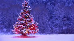Find the best Christmas Tree Wallpaper Backgrounds on WallpaperTag. Snow Covered Christmas Trees, Snowy Christmas Tree, Christmas Tree Background, Beautiful Christmas Trees, Christmas Music, Xmas Tree, Office Christmas, Christmas Holiday, Christmas Ideas