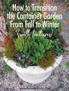 Gardening With Containers Learn how to transition a fall container garden to a winter garden with the use of texture. - Learn how to transition a fall container garden to a winter garden with the use of texture. Winter Container Gardening, Indoor Gardening Supplies, Container Gardening Vegetables, Fall Container Plants, Garden Container, Container Flowers, Vegetable Gardening, Gemüseanbau In Kübeln, Fall Containers