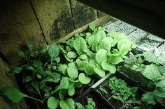 Plantor står och trängs under växtbelysning.