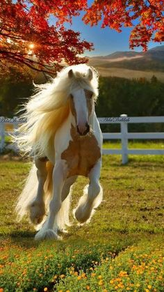Save all the horses from cruelty and being neglected Cute Baby Animals, Farm Animals, Animals And Pets, Most Beautiful Horses, All The Pretty Horses, Majestic Horse, Majestic Animals, Cute Horses, Horse Love