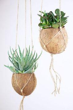 {DIY} Succulents in Coconut Shell - Flower Basket with Macram .- {DIY} Sukkulenten in Kokosnussschale – Blumenkorb mit Makramee {DIY} succulents in coconut shell – flower basket with macrame - Suculentas Diy, Cactus Y Suculentas, Hanging Baskets, Hanging Planters, Garden Planters, Diy Garden, Urban Planters, Garden Basket, Hanging Succulents
