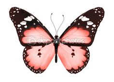 mariposa roja, aislado en blanco — Imagen de stock #12105147