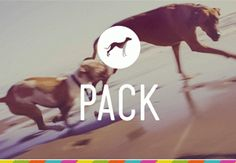 FourAndSons_PackDog_Feature_01