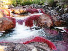 """Rio Caño Cristales, Sierra Nevada de la Macarena- Colombia / """" Caño Cristales """" River"""