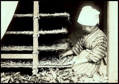 """FEEDING MULBERRY LEAVES TO SILK WORMS in OLD JAPAN    The halation (or """"glow"""") around the top of her head scarf is original to the scanned silver print.    Ca.1915-23."""
