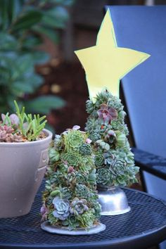 Deck the Halls with Boughs of Succulents - Succulent Gardens