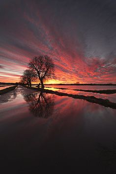 Flooded Somerset by Peter Spencer Image Nature, All Nature, Amazing Nature, Beautiful World, Beautiful Places, Amazing Places, Somerset Levels, Landscape Photography, Nature Photography
