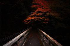Photographer Yasuhiro Ogawa