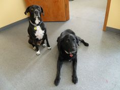 Your Greeters! Willie and Ruby - happy to see everyone but UPS.
