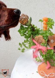 Hundegeburtstagskuchen Hund Geburtstag Leckerli zum Geburtstag Hundebloghaus