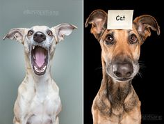 Funny dog portraits by Elke Vogelsang