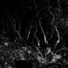 http://miropolca.blogspot.sk/2012/06/cierny-les-black-forest.html