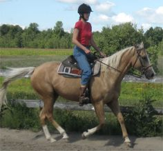 ride a horse at a fast pace Horse Riding, Bucket, Horses, Animals, Animales, Animaux, Animal, Animais, Buckets