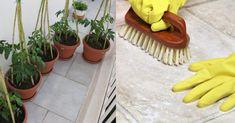 Εξαφανίστε τα καφέ σημάδια που αφήνουν οι γλάστρες στα πλακάκια, με αυτή τη φυσική συνταγή Deep Cleaning, Cleaning Hacks, Housekeeping, Clean House, Plastic Cutting Board, Diy And Crafts, The Cure, Projects To Try, Home And Garden
