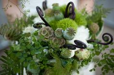 Decorative fiddlehead ferns