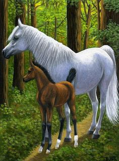 ON THE FOREST PATH.....this grey mare & her foal are walking along the quiet spring forest path