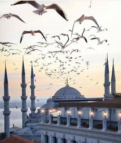 Sultan Ahmed Mosque // by Julian Herbrig Beautiful Mosques, Beautiful Places, Sultan Ahmed Mosque, Blue Mosque Istanbul, Hagia Sophia, Grand Mosque, Islamic Architecture, Sunset Pictures, Sunset Pics