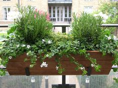 Summer window box... rosemary, bacopa and thyme