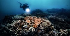 Es el tercer evento de este tipo que tiene lugar en solo cinco años, y esta vez, el daño está más extendido que las anteriores Hard Coral, Coral Bleaching, Soft Corals, Great Barrier Reef, All Over The World, Something To Do, Water, Outdoor, Water Quality