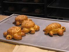 Turtles!  I bet the girls would like to make these