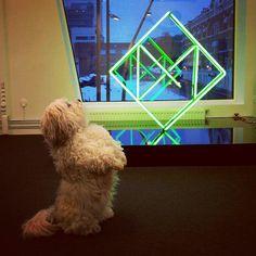 Kontorhunden Barney er entusiastisk for vår nye neon Nye, Logo, Logos, Environmental Print