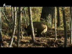 Portugal Selvagem - O Magnifico Lobo Ibérico