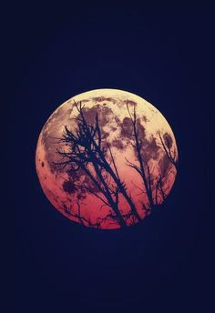 The blood moon is the last stage of the curse. Ciel Nocturne, Cool Photos, Beautiful Pictures, Aquarell Tattoo, Moon Pictures, Beautiful Moon, Beautiful Places, Blood Moon, Jolie Photo