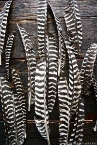 The two toned stripes of these feathers show the precise patterns that can be found in nature. You can also see the soft texture of the feathers, and the curved shapes of the feather spines. Textures Patterns, Color Patterns, Print Patterns, Animal Patterns, Shape Patterns, Art Grunge, Black White Stripes, Black And White, Bold Stripes