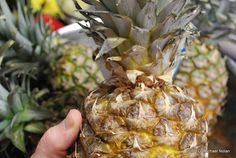 How to grow pineapples from their scraps