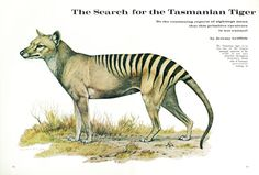 Jeremy Grifftih tried to rediscover and save the Tasmanian Tiger (thylacine) from extinction. His findings were widely reported, with articles appearing in the American Museum of Natural History's journal, Natural History titled 'The Search for the Tasmanian Tiger'. Read more about his remarkable 6-year search here: http://www.worldtransformation.com/tasmanian-tiger-search/