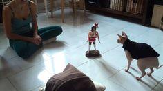 """Funny """" Santa baby""""  xmas cat prank"""