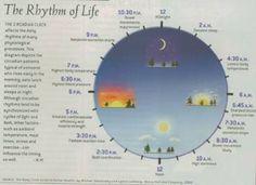Social Rhythm Metric http://www.dbsalliance.org/Conference2013/Handouts/Sunday/Getting%20in%20the%20Rhythm/Rhythms%20of%20Life.pdf