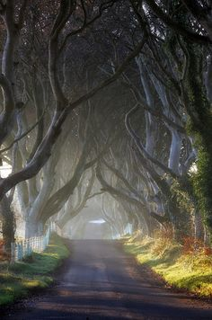 IRELAND. A fantasy-like avenue of beech trees, the Dark Hedges was planted in the 18th century by the Stuart family to impress visitors upon the entrance of their home. The road is known to be haunted by the Grey Lady, who appears at dusk.