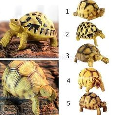 Buy Resin Tortoise Simulated Geochelone Sulcata Turtle Animal Statues Collection at online store Tortoise Cage, Tortoise Habitat, Tortoise Turtle, Deer Statues, Animal Statues, Garden Statues, Sulcata Tortoise, Cat Litter Mat, Russian Tortoise