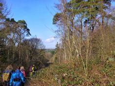 OutdoorFriends' HIKE: Boswandeling - Trage tocht met Rob Wolfs, zondag 2 maart 2014 #wandelen #hiking
