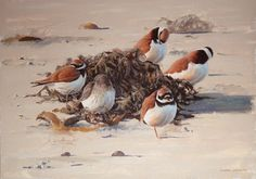 Ringed Plovers & Dunlin by Jonathan Latimer
